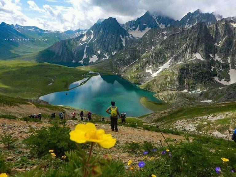 Two alpine of Kashmir.